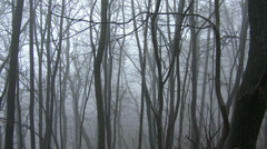 4K Super Scary Winter Foggy Forest 3 pan Stock Footage