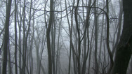 Stock Video Footage of 4K Super Scary Winter Foggy Forest 3 pan