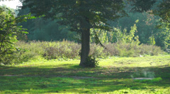 City park in sunny day Stock Footage