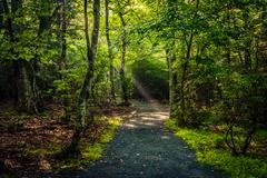 light beams in the forest, seen on the limberlost trail in shenandoah nationa - stock photo
