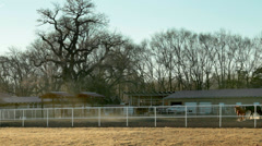 Thoroughbred Horse Ranch -002 Stock Footage