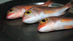 Fresh fish, red snapper Stock Footage