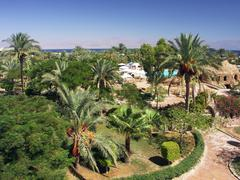 Egypt - garden with palms near Red Sea - stock photo