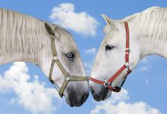 Kiss white horse with blue sky - stock photo