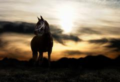 Sunset and black horse Stock Photos