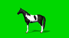 Horse looks around - seperated on green screen Stock Footage