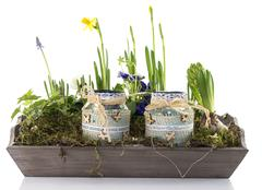 Mini garden with flowers Stock Photos