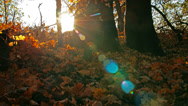 Stock Video Footage of autumn forest. 4K. FULL HD, 4096x2304.