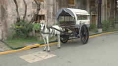Horse-drawn carriage white Stock Footage