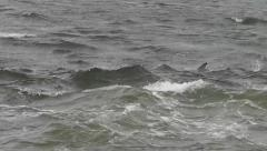 Bottlenose Dolphin jumping Stock Footage
