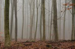 fog in winter forest - stock photo