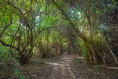 Tien viidakon metsässä Kuvituskuvat