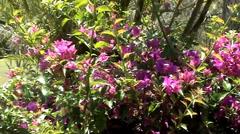 Blooming Australian Plant - stock footage