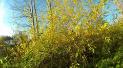 Autumn Colors - stock footage