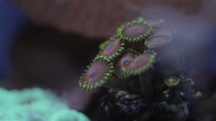 Coral 7 Stock Footage