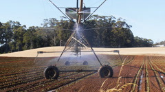 Center pivot irrigation-3 Stock Footage