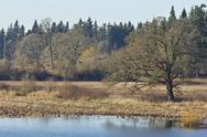 Stock Photo of tualatin national wildlife refuge oregon.
