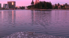 Ripples on the surface of Lake Merritt at dusk Stock Footage
