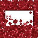 Stock Illustration of valentines day red petals background with messgae card