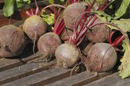Stock Photo of beetroot