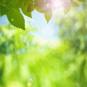 Summer foliage. impasto art print stylezed backgrounds Stock Photos