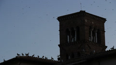 Seagulls line a church roof Stock Footage