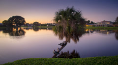 Ducks in a Row on Palm Tree Over Lake Stock Footage