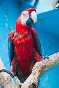 Ara parrot Stock Photos