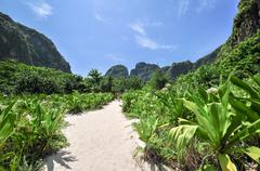 Jungle of maya bay phi phi leh island, krabi thailand, asia Stock Photos