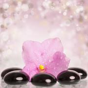 Black spa stones and flower on colorful background Stock Photos