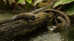 Travelling slider forest river and rain Stock Footage