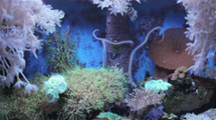 Coral reef anemones 2 Stock Footage