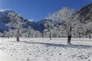 Stock Photo of Austria, Tyrol, Eng, Grosser Ahornboden, landscape with snow covered maple trees
