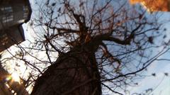 Oak tree burr Stock Footage