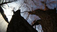 Willow tree fisheye Stock Footage