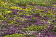 Stock Photo of France, Bretagne, Cap Frehel, Landscape with gorse and heather