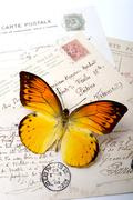 Orange butterfly on postcards Stock Photos