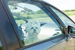 dog sitting in a car - stock photo