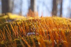 Moss sprouts Stock Photos
