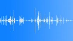 Snow Linnut Fly - lintuparvi huutaa äänitehosteet Äänitehoste