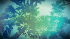 Colorful palm trees Stock Footage