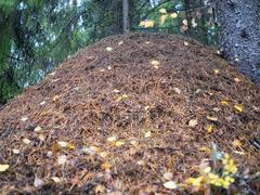 Huge ant hill Stock Photos