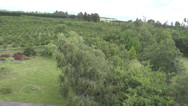 Stock Video Footage of Aerial Shot of an orchard