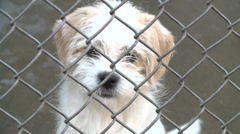 PUPPY DOG SAD IN SHELTER HOMELESS BEHIND CHAIN FENCE AT POUND Stock Footage