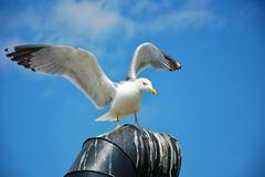 Seagull standing on a chimney Stock Photos