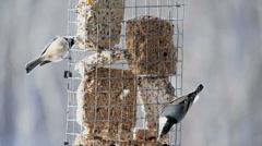 Winter birds feeding Stock Footage