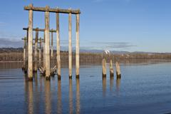 remnants of the past columbia river oregon. - stock photo