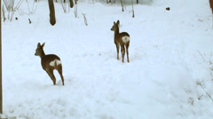 Some deers in the forest winter. Stock Footage