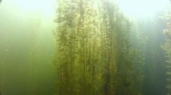 Sunbeams play underwater algae in lake Stock Footage