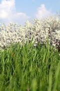 Green grass close up spring season Stock Photos